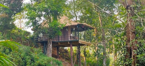 Morleys Place. Aiden's Abode Treehouse