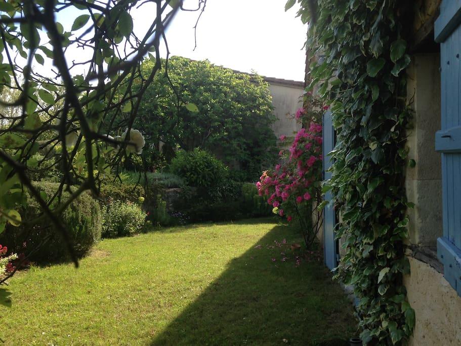 Jardin coté cuisine