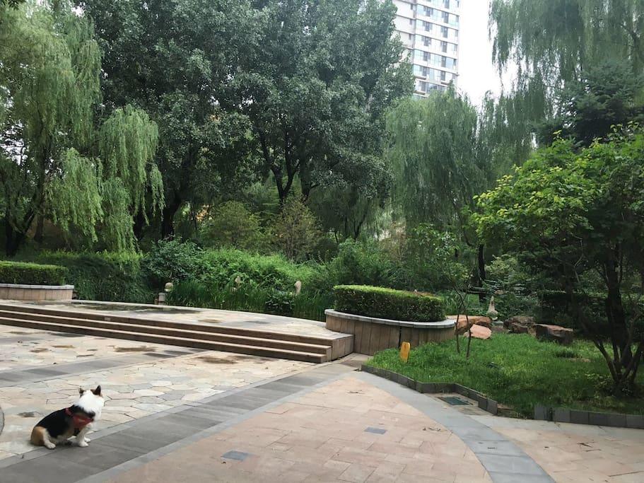 小区里的优美环境-随处可见的绿树、亭台水榭