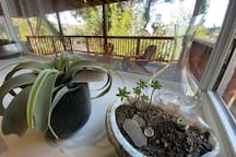 Ocean view Tree House Studio