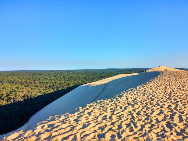 La dune du Pilat la plus haute d'Europe. Un endroit merveilleux. 1 million d'hectares de pins à gauche.