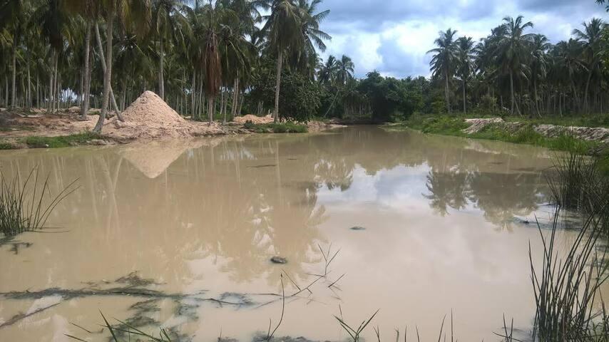 Anyaa Wellness Coconut Villa