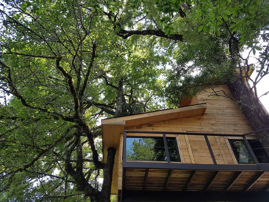 View of the treehouse from the ground.