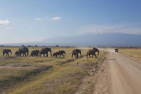 Wilson amboseli safaris and Tour Guide