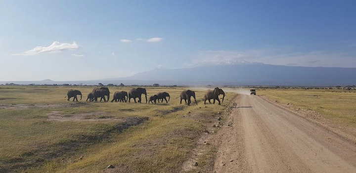 Wilson amboseli safaris and Tour Guide