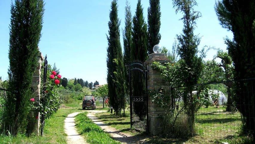 Toscana natura - Terricciola - House