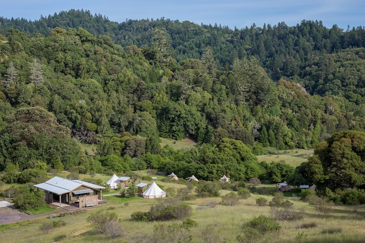 Toyon & Fiddlehead Glamping Tents