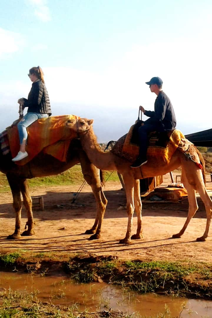 Camel ride experience