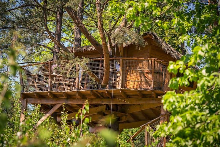 Treehouse Stvořidla glamping v korunách borovic