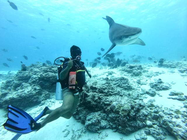 Tiger Shark dives are few minutes from your room