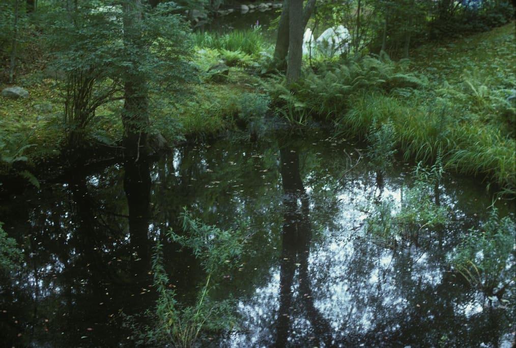 Turtle pond behind house