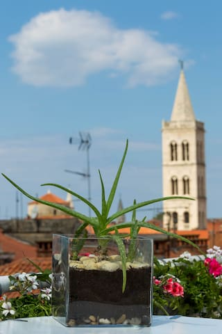 Apartment Anita - Old town of Zadar