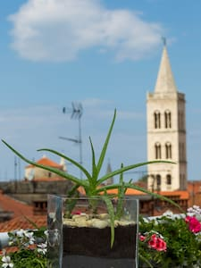 Apartment Anita - Old town of Zadar - Zadar - Lejlighed
