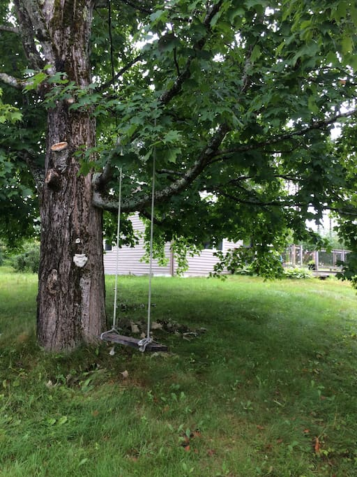 A large maple tree in the yard with a simple swing.