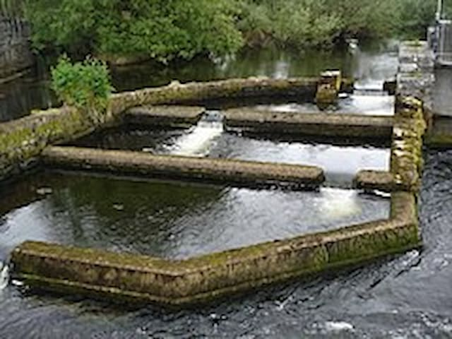 River Fergus Fish ladder
