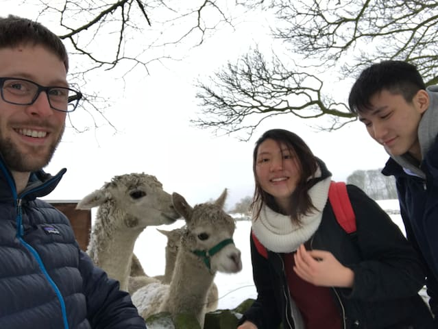 Richard taking recent guests Beatrice and Justin to a nearby Alpaca Farm