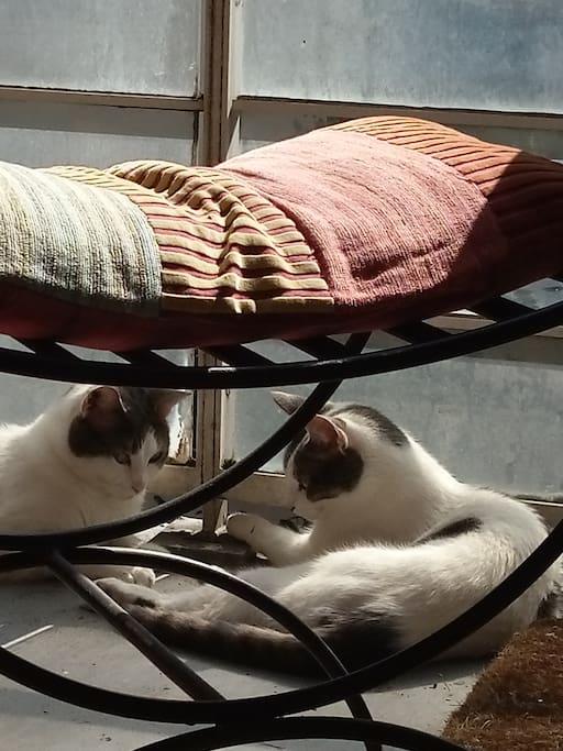 Ambroise&Oussia