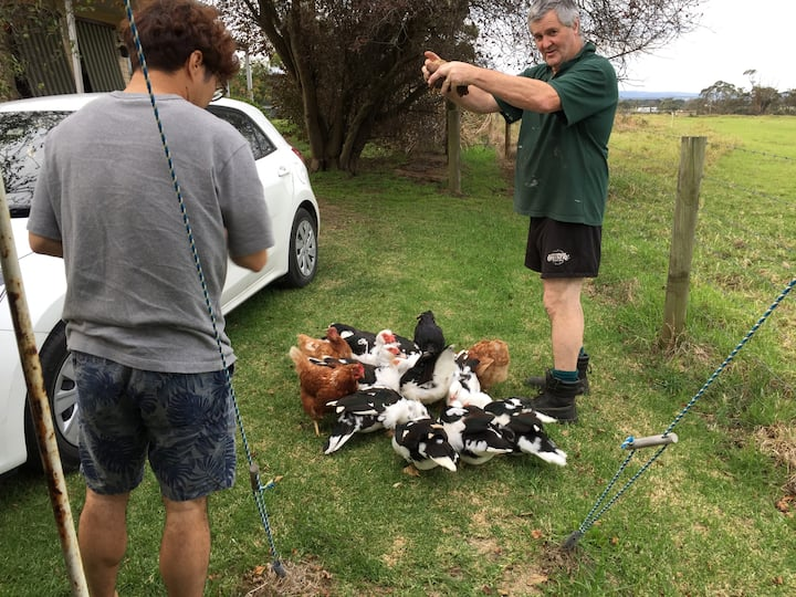 Guest  feeding the Ducks and Chooks.