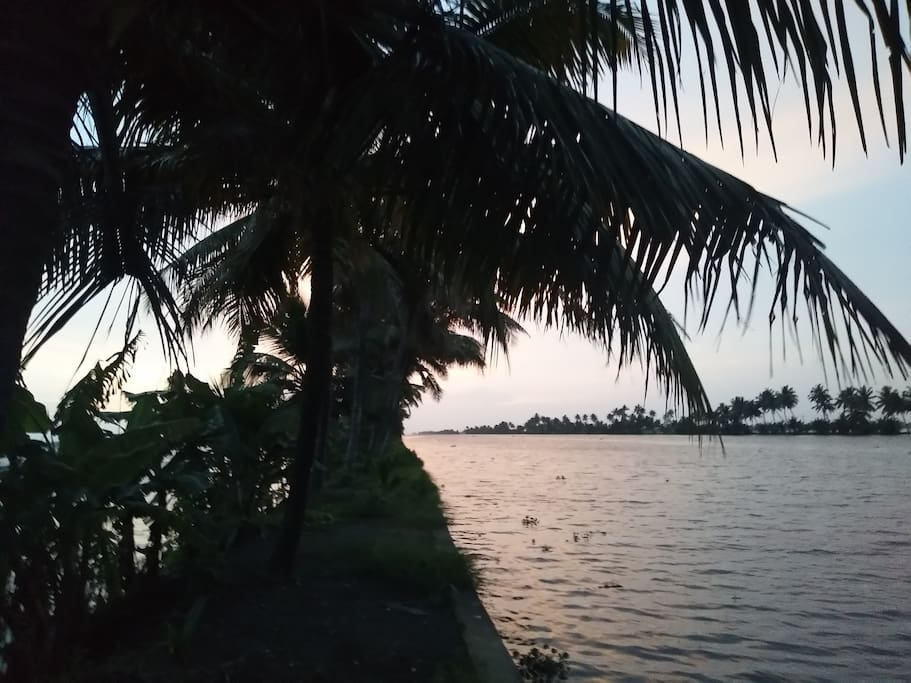 Long narrow stretch of coconut trees
