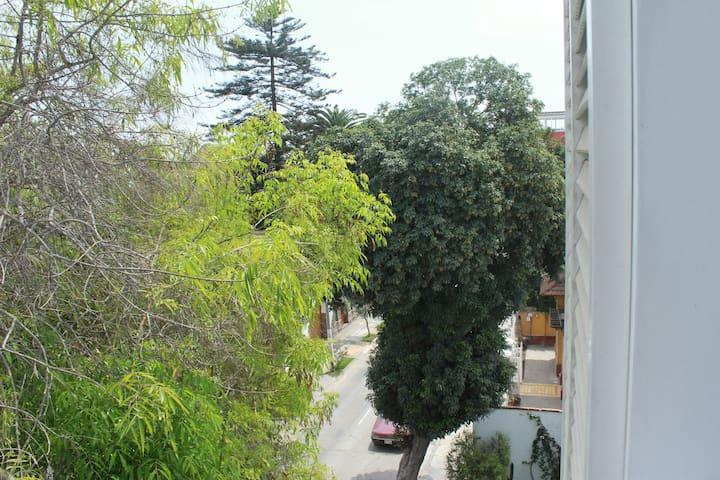 Vista del balcon de la sala al malecon. Lindo arbol que casi se puede tocar!! Lindo para sentarse a ver aves!!