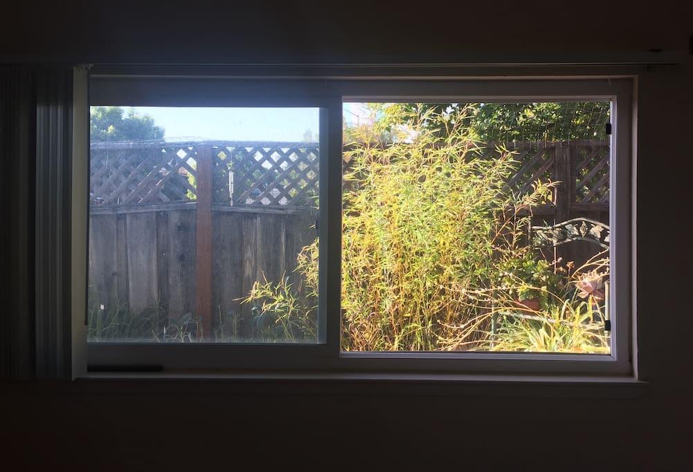 Bedroom window into side yard