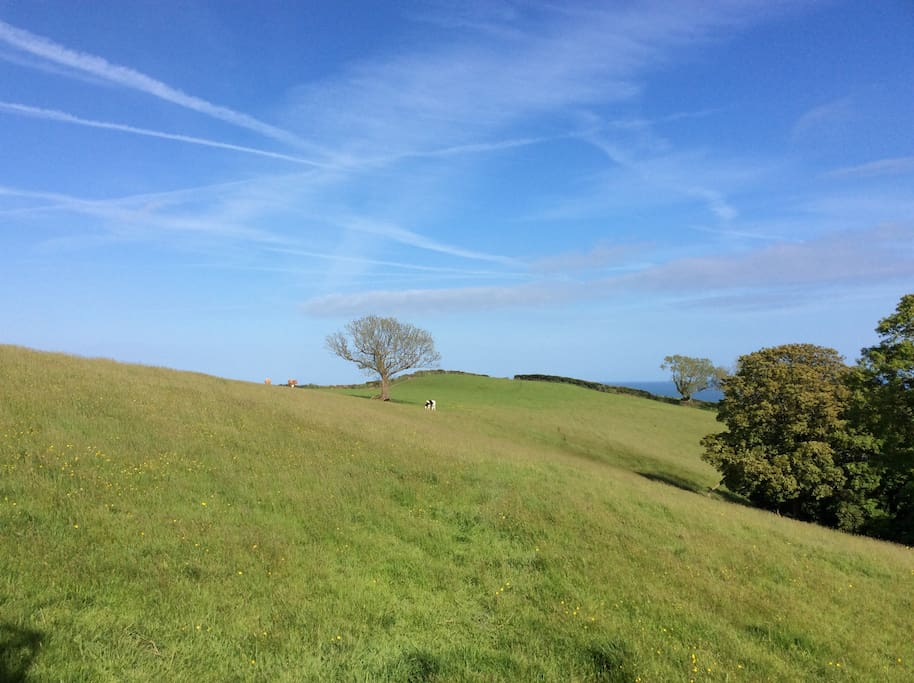 "Views from Private Balcony over countryside to the sea - 30 meters from Coastal Path. ""Fantastic Walking"", Brian, London"