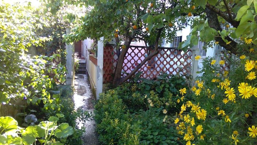 Casa do Jardim - Figueira da Foz - Huis