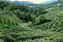 prosecco hills - Rolle