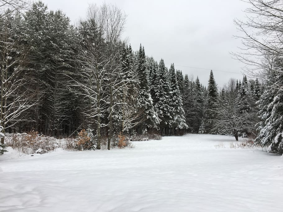 This is our back year. You can follow a snowshoeing/cross country ski trail through here.