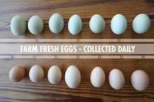 Fresh eggs available daily.