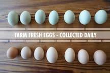 Fresh eggs available daily.
