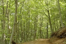 Montseny Natural Park, Reserve of the Biosphere