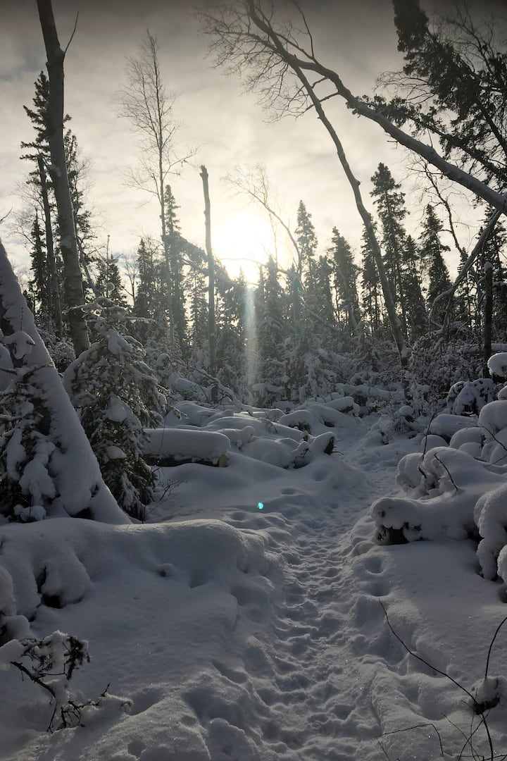 Amazing trees full of snow