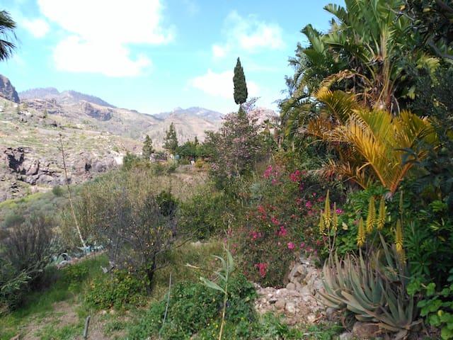 Casa Canaria de Campo  Pequeño Oasis - San Bartolomé de Tirajana - House