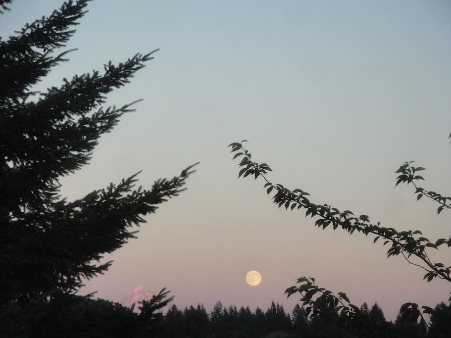 View of tip of Mt. Hood and the Moon Rising from the yard.