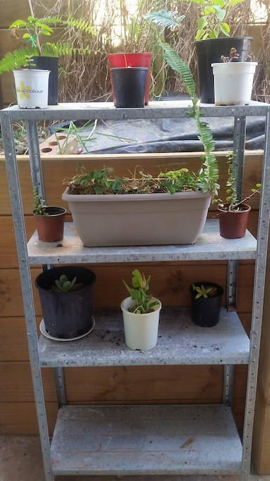 Shelf with plants and herbs
