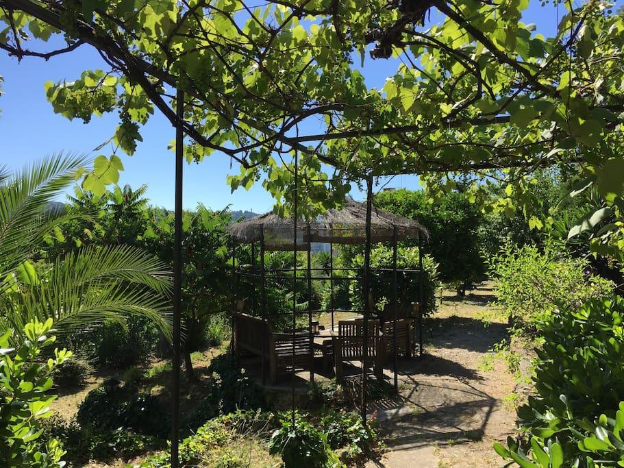 Coté jardin avec tonnelle face collines de la Californie et du Super cannes...
