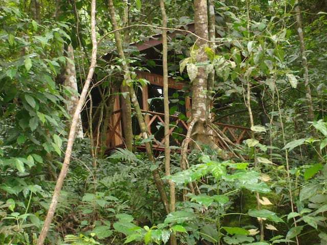 Jungle Tree House 2 at Poco Cielo Resort - Atenas - Cabana en un arbre
