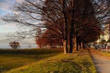 Neighbourhood beautiful English Bay - 10 min. walk