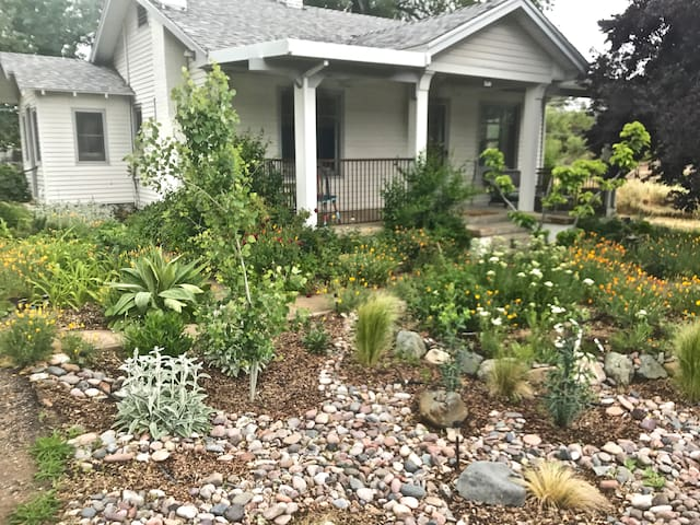 New front yard rain garden