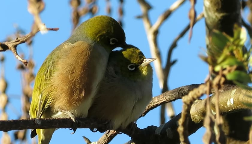 Silvereye Haven - sun and birds