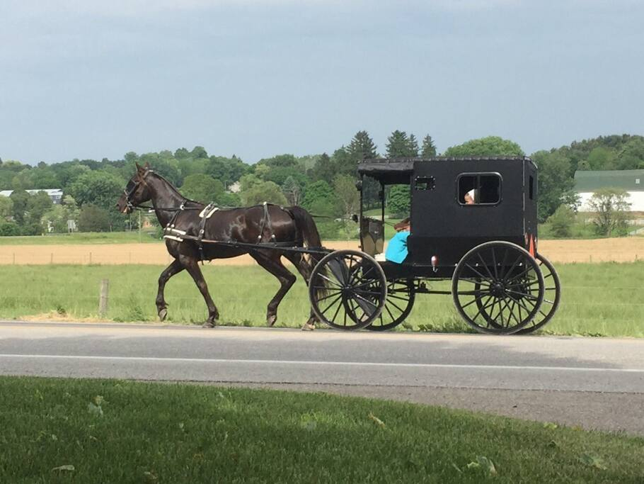 Enjoy the sights and sounds of our Amish neighbors.