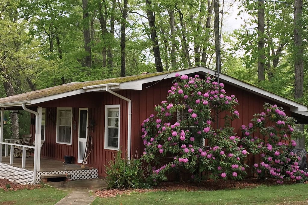 "100% of our guests comment, ""Its much bigger than the pictures portray."" This is your 1st view of the cabin when you drive up (taken in May when the rhododendrons are in bloom)"
