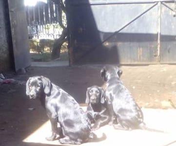 casa familiar acogedora - Chillán