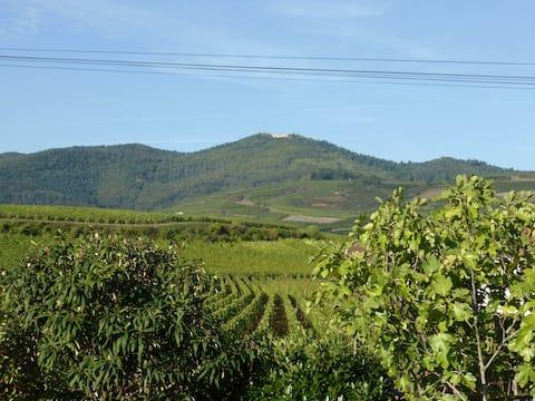 Joli gîte avec vue sur vignoble, proche de Colmar