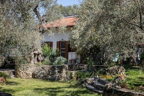 Piges - Ferienhaus im idyllischen Olivenhain
