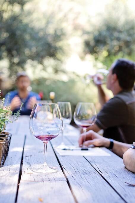 Dégustation de vin Salentin