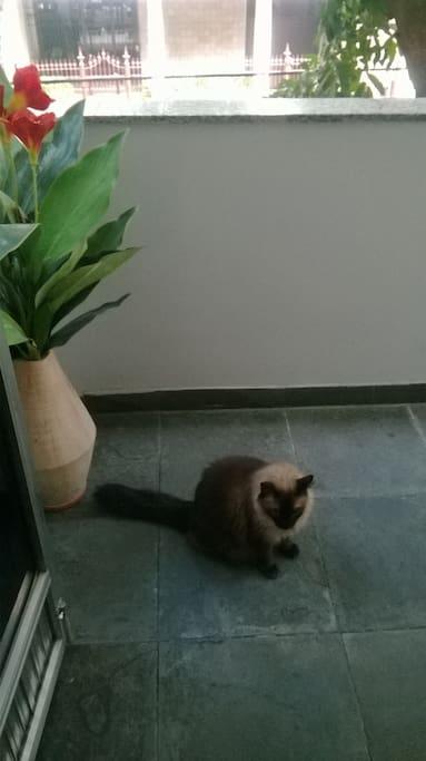 Animal na residencia