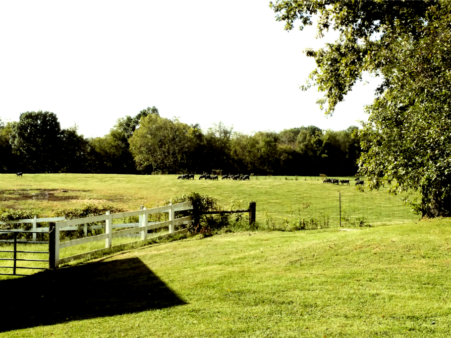 Glenriver Cottage A Peaceful Country Escape Houses For