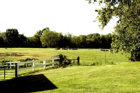 Glenriver Cottage - A peaceful country escape - Harrodsburg
